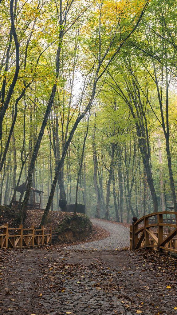 İstanbul Belgrad Ormanı