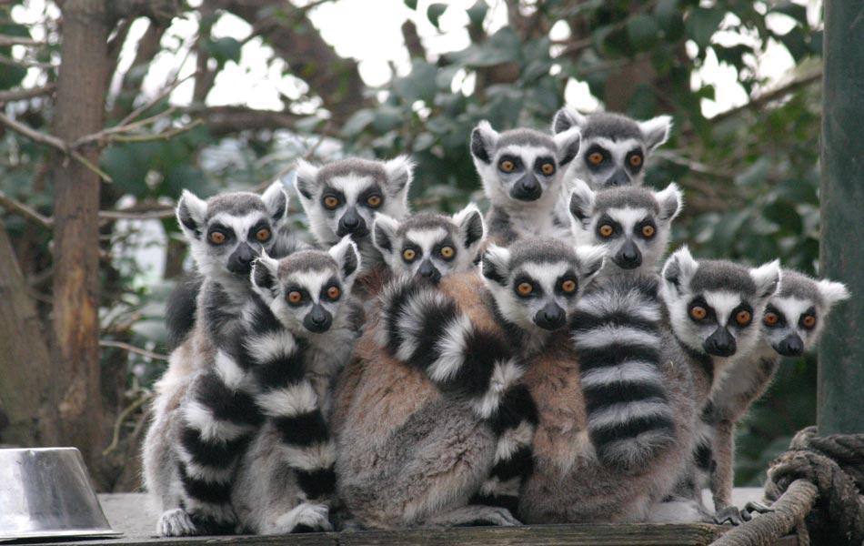 Faruk Yalçın Darıca Hayvanat Bahçesi