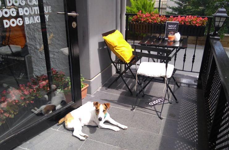 Jack's Dog Cafe, Suadiye